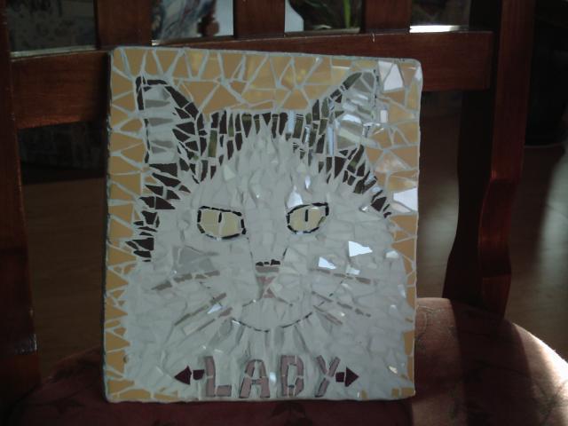 Lady my cat